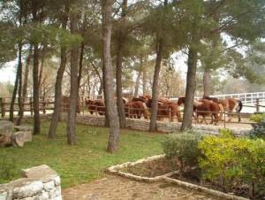 Bando Pubblico per la vendita di cavalli e capre Girgentane